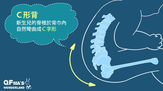 合適的背巾會讓新生兒脊椎呈現適合發育的C字型